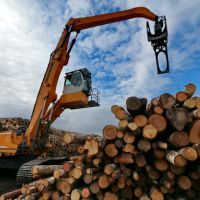 Russia timber exports witness strong growth in 2014